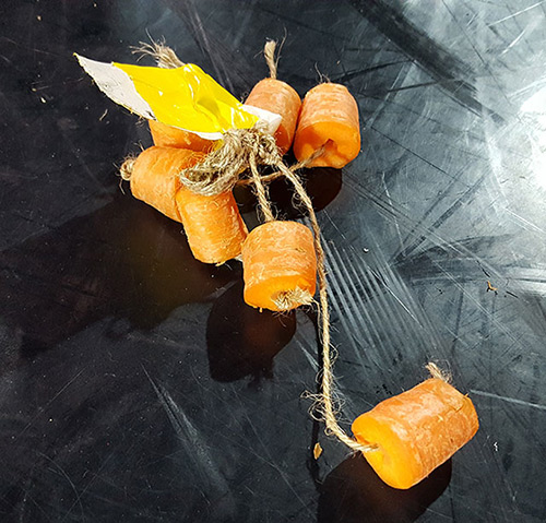 Scotch Wichmann carrot performance art prop